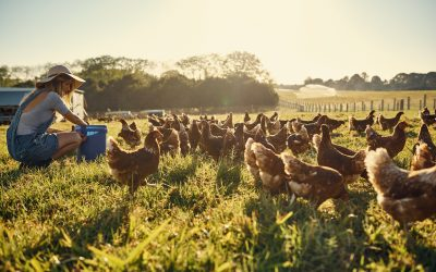 "The Child Blogger – ""How this free-range egg company is changing the game!"""